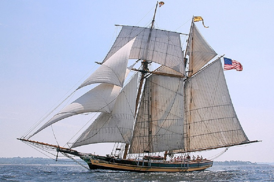 Baltimore Clipper Harvey