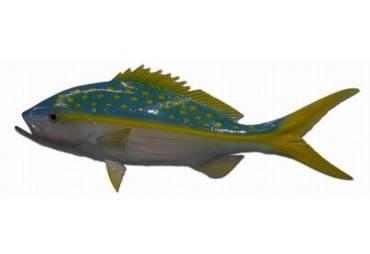 "27"" Yellowtail Snapper Half Mount Fish Replica"