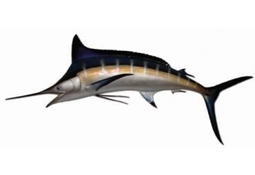 """94"""" Blue Marlin"""
